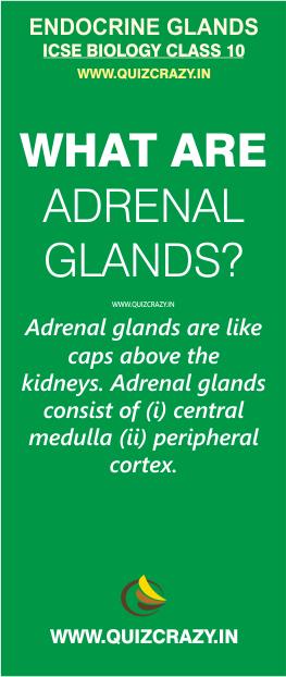 Define Adrenal glands