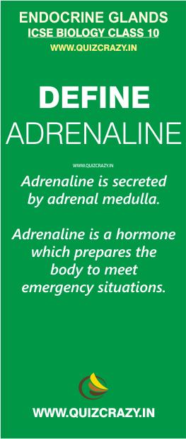 Define Adrenaline