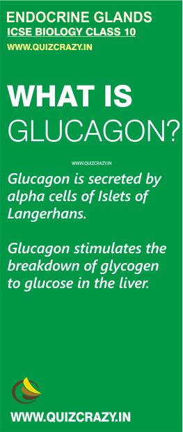 Define Glucagon