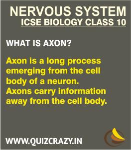 Define Axon