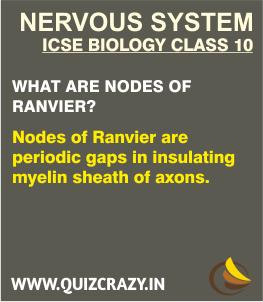 Define Nodes of Ranvier