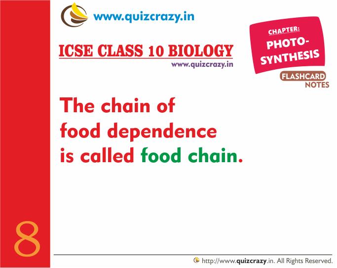 Define food chain