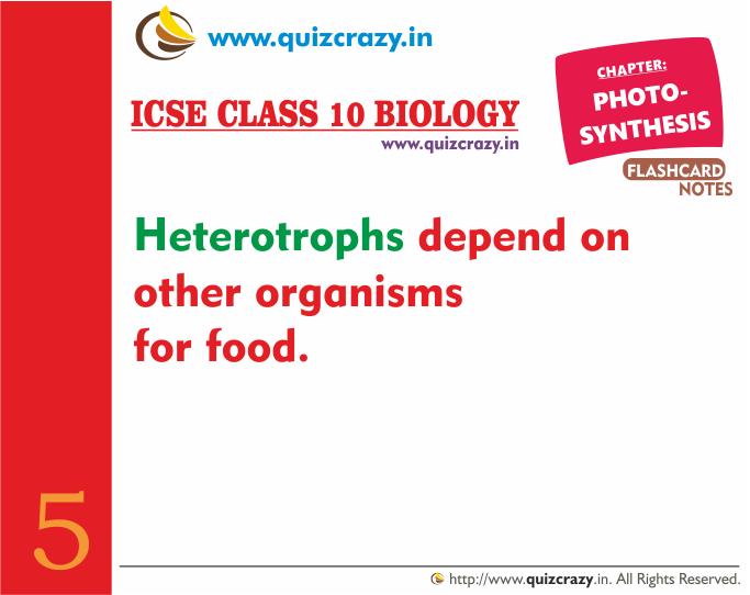Define Heterotrophs