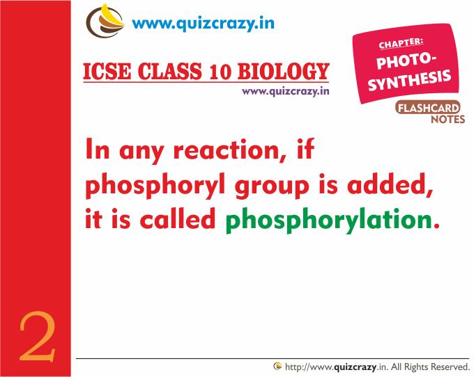 Define phosphorylation