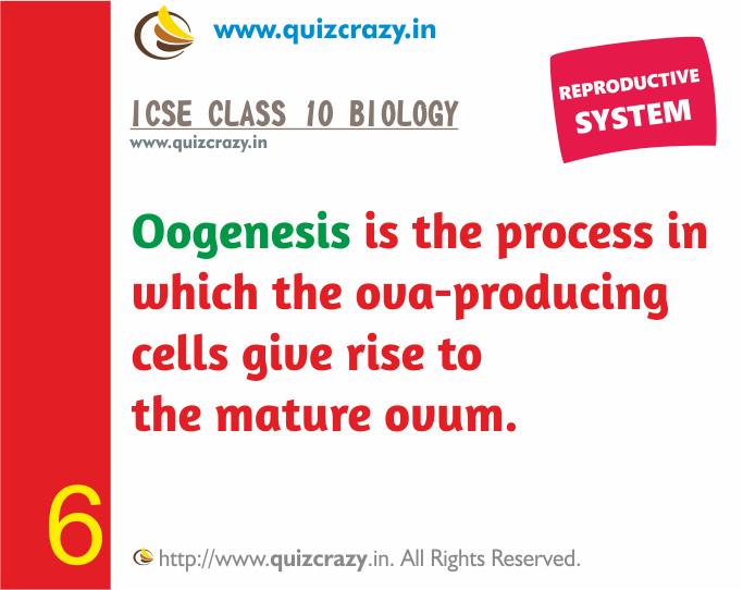 Define Oogenesis