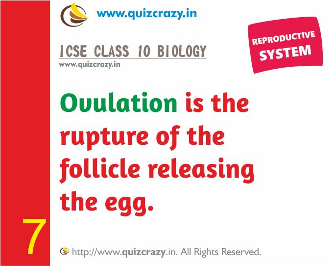 Define Ovulation
