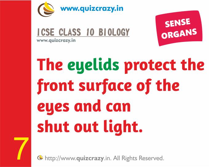 Define eyelids