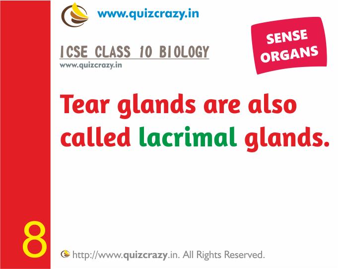 Define lacrimal glands