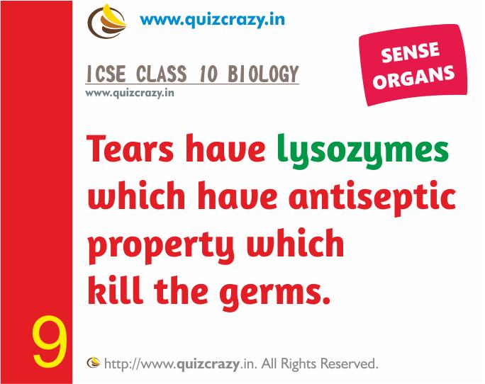 Define lysozymes