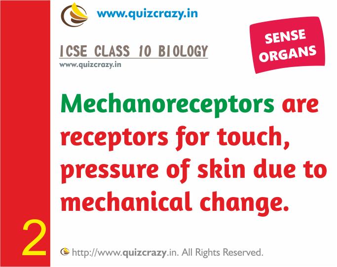 Define Mechanoreceptors