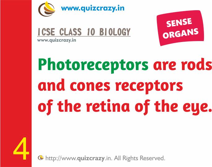 Define Photoreceptors