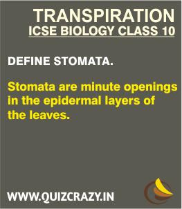 Define Stomata